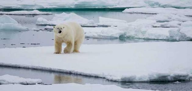 أين يقع القطب الشمالي