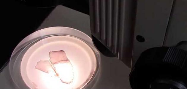 المجهر الضوئي المركب واستخداماته