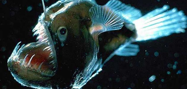 أخطر حيوانات مائية مفترسة