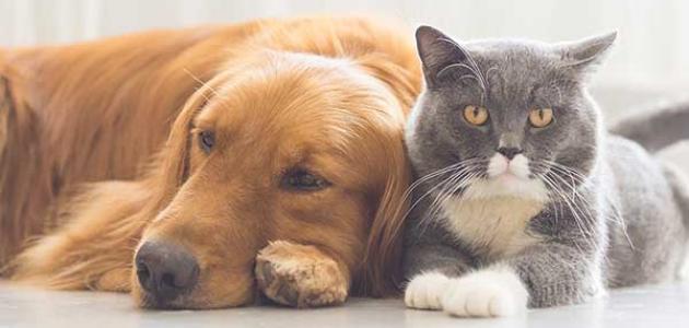 موضوع تعبير عن الحيوانات الأليفة