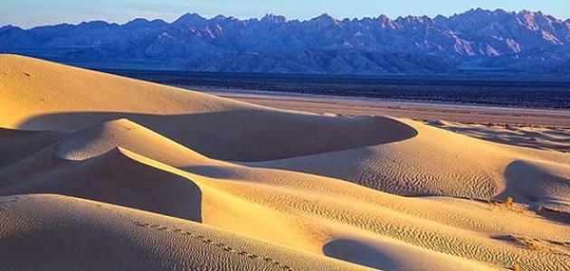تعبير عن البيئة الصحراوية