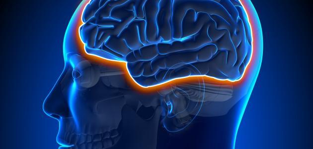 معلومات عن الحاجز الدموي الدماغي