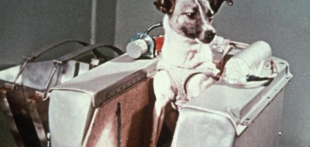 الكلبة لايكا والصعود للفضاء