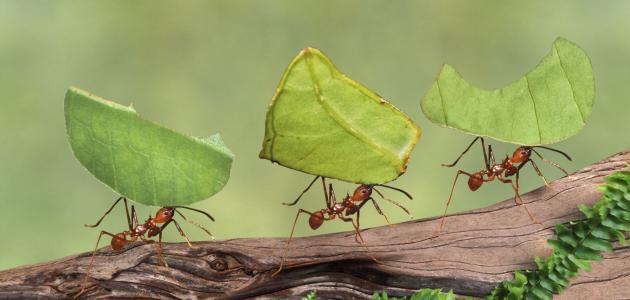 قصة سيدنا سليمان مع النمل