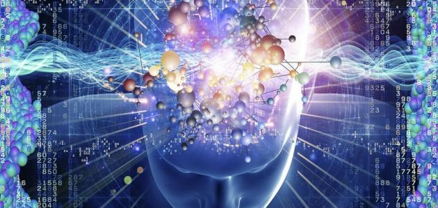 مكونات الجهاز العصبي المحيطي