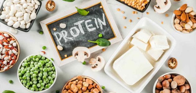 بحث عن البروتينات