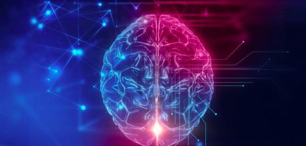 وظائف خلايا الدماغ