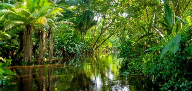 بحث عن غابة الأمازون