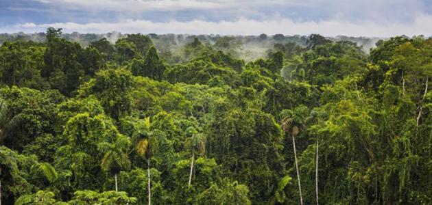 تعريف الغابات المطيرة