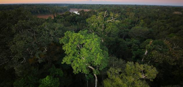 مساحة غابات الأمازون