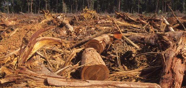 دور الإنسان في تدمير غابات الأمازون