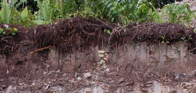طبقات التربة ومكوناتها